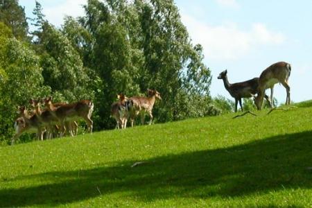 Kosewo - ferma jeleniowatych